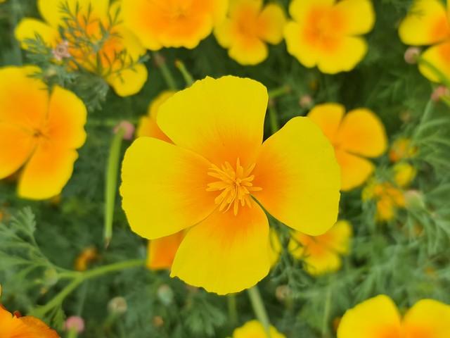 Sommer im Hausgarten -es blüht und blüht