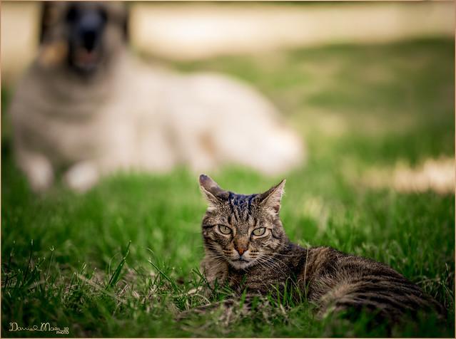 Tolo&Cleo