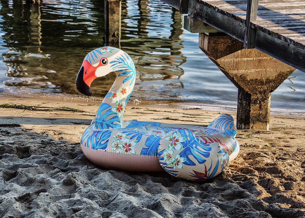 Summer Wildlife