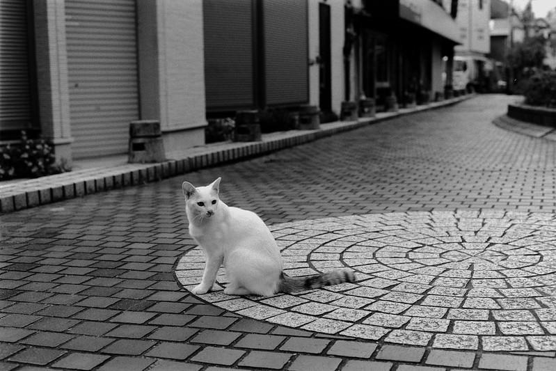 03 20210713Leica M2+Carl Zeiss Planar50mm f2 0+Fujifilm ACROS100池袋三丁目谷端川緑道の猫 白三毛