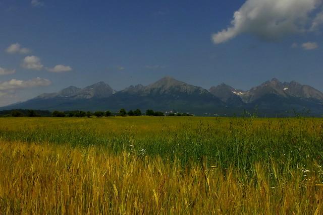 July landscape