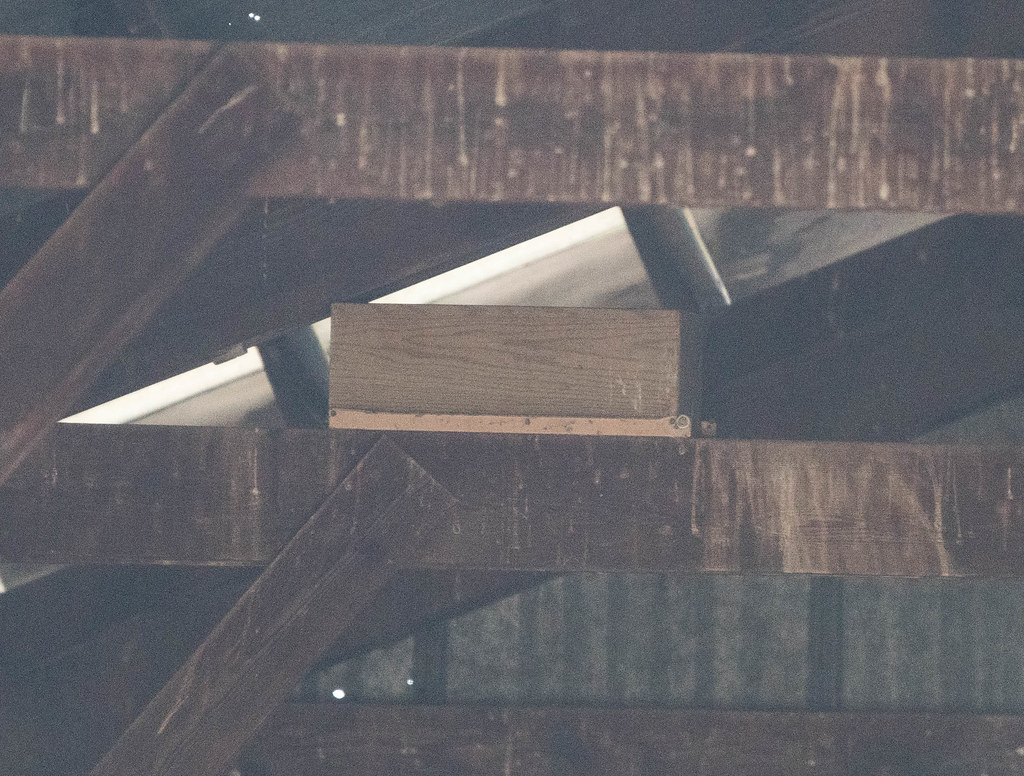 Nest Box (1 of 1)