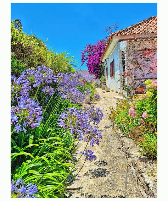 My garden is beautiful (1)