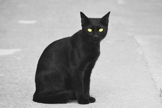 Gatito negro ☘