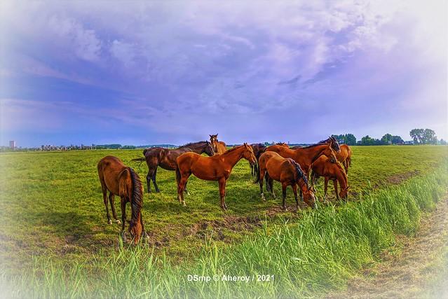 Horses & Freedom, Groningen , the Netherlands