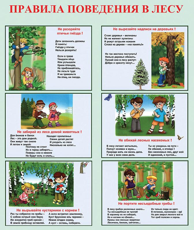 Меры личной безопасности в лесу