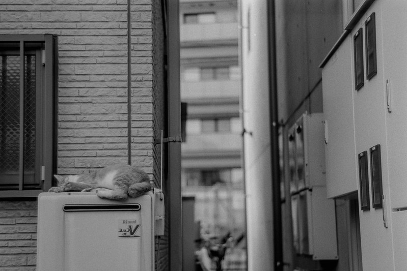 25 20210717Leica Ⅲf+Jupiter8+Fujifilm ACROS雑司ヶ谷三丁目大鳥神社脇路地の猫 茶白