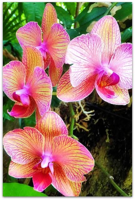 Orchids at the Audubon House