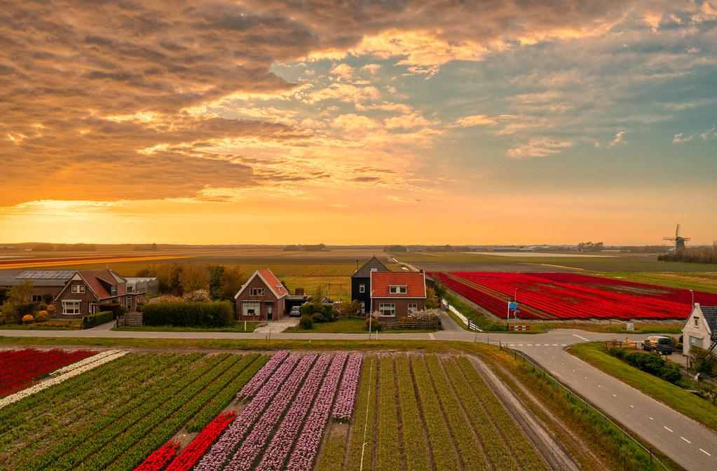 We all have such nice gardens around here. 't Zand, Holland.