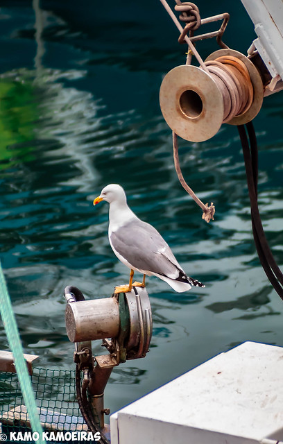 capiteando  el pesquero
