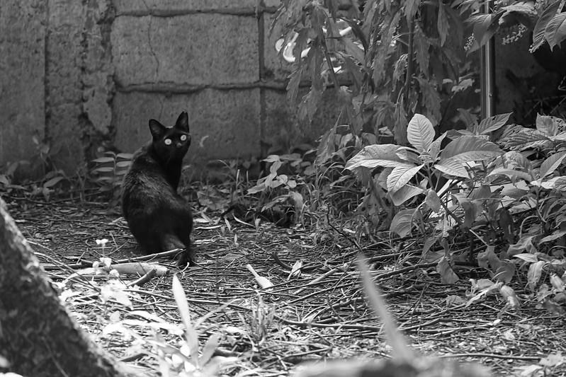13Sony α7Ⅱ+TAMRON 28 200mm f2 8 5 6 Di III RXD  Model A071 雑司ヶ谷三丁目七曲りの路地の猫 黒