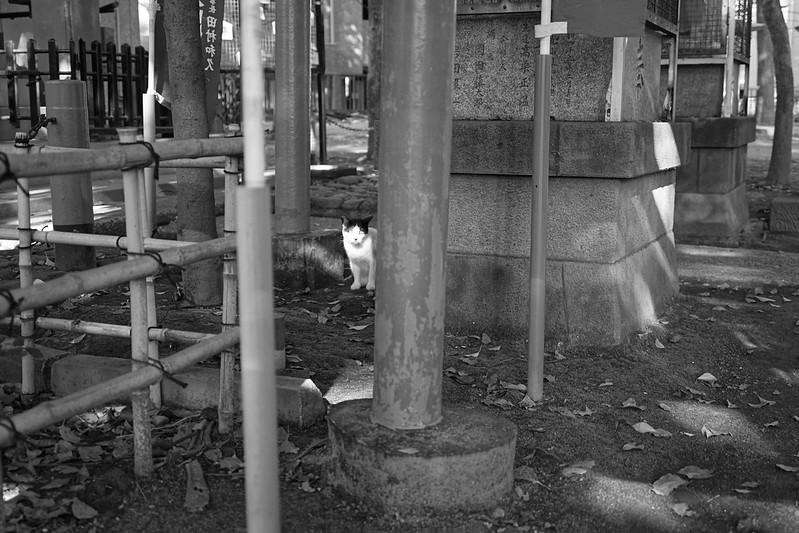 07Sony α7Ⅱ+TAMRON 28 200mm f2 8 5 6 Di III RXD  Model A071 雑司ヶ谷三丁目鬼子母神堂の猫 黒ブチ