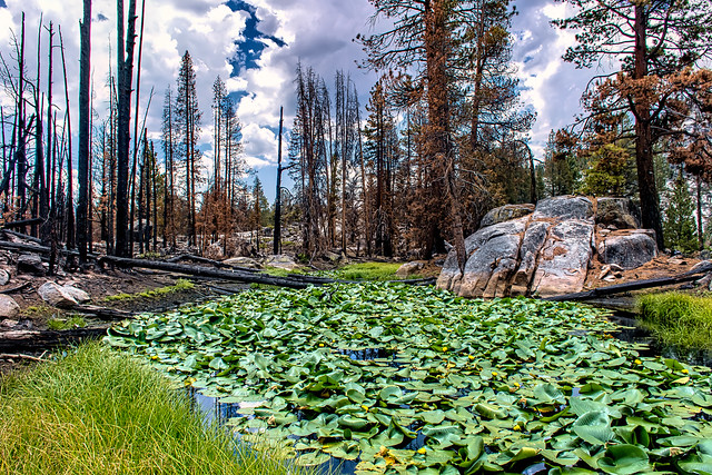 Ward Lake Pond and the Creek Fire (Explored)