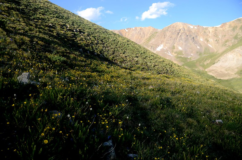 Mount Belford's northwest slope (2)