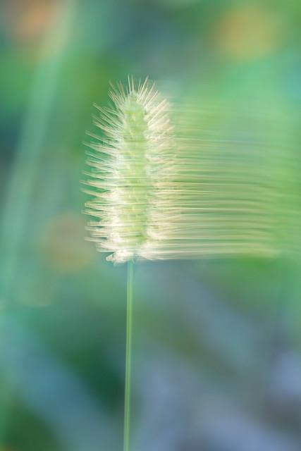Florida Woodland Abstract:  (Backlight grass ICM).