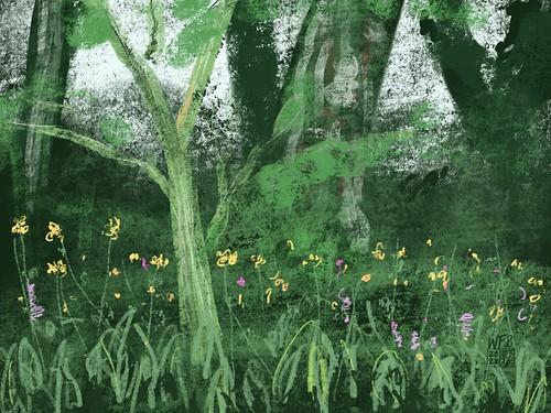 Acer davidii and Primula understorey
