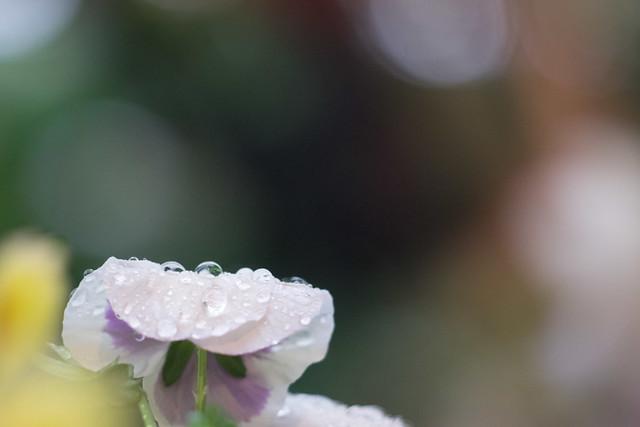 167/365 - Rain