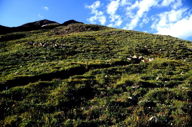 Mount Belford's northwest slope (3)