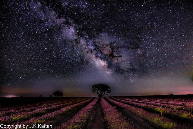 In the Lavender Fields.............., En los Campos de Lavanada