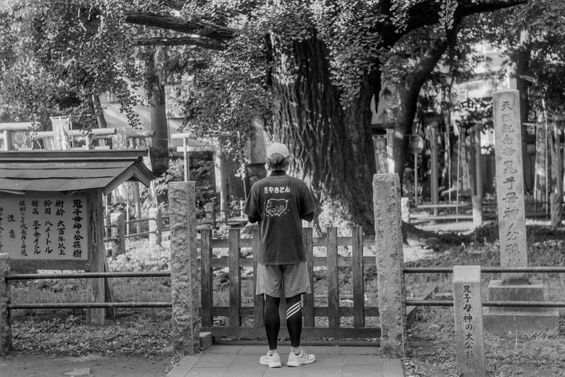 24 20210717Leica Ⅲf+Jupiter8+Fujifilm ACROS雑司ヶ谷三丁目雑司ヶ谷鬼子母神堂の大銀杏