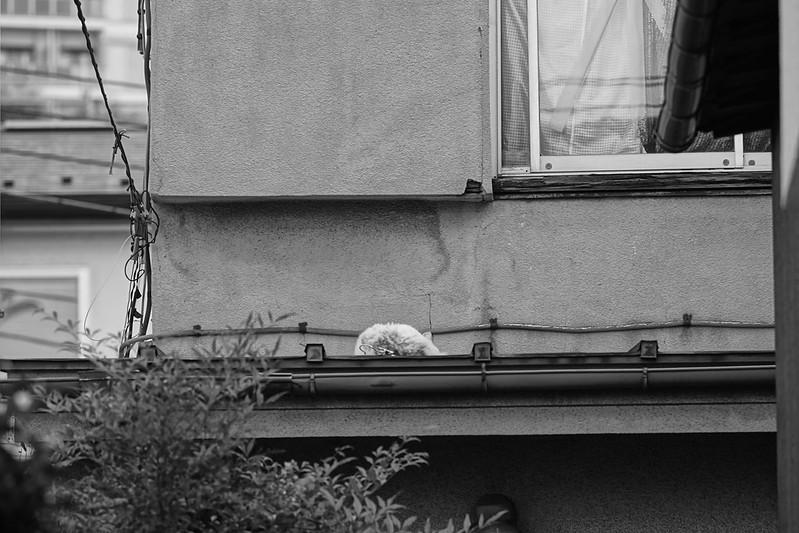 17Sony α7Ⅱ+TAMRON 28 200mm f2 8 5 6 Di III RXD  Model A071 南池袋三丁目坂の路地の屋根の上の猫だまり 茶白