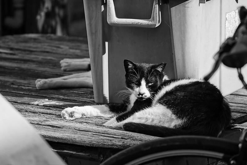 10Sony α7Ⅱ+TAMRON 28 200mm f2 8 5 6 Di III RXD  Model A071 雑司ヶ谷三丁目鬼子母神参道キアズマ珈琲の猫 黒白