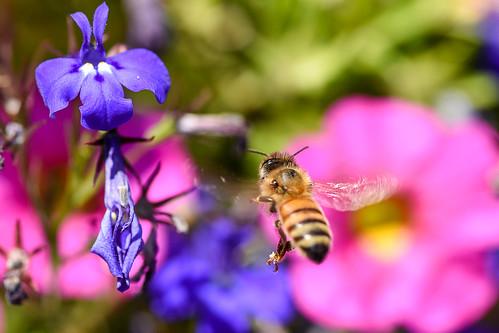 Bee Buffet