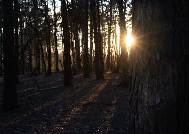 The sun breaking through [Explored 🌟]