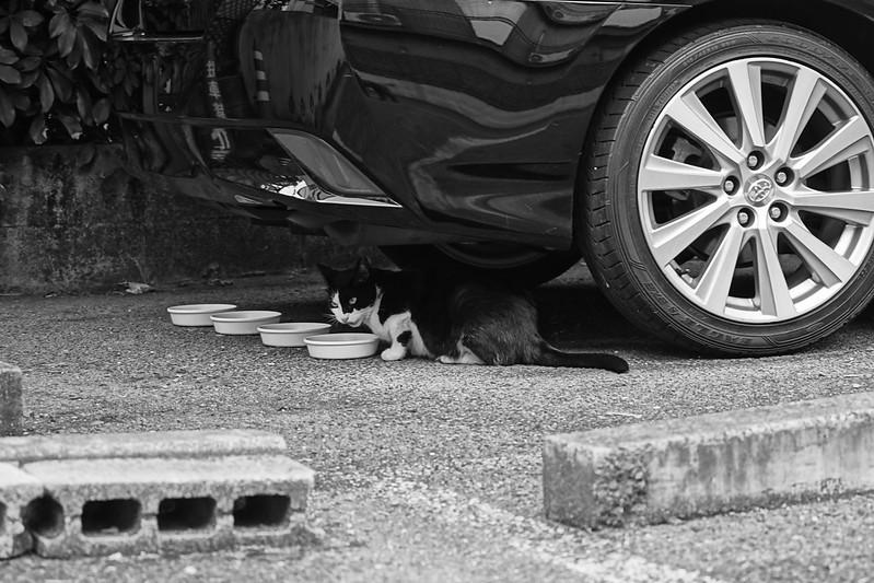 19Sony α7Ⅱ+TAMRON 28 200mm f2 8 5 6 Di III RXD  Model A071 南池袋三丁目建設現場の黒白八割れ一家の猫だまり 黒白八割れ
