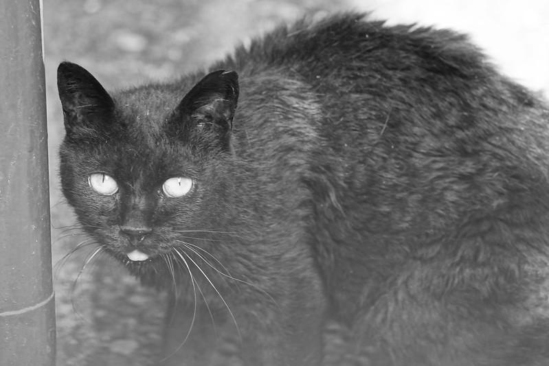 12Sony α7Ⅱ+TAMRON 28 200mm f2 8 5 6 Di III RXD  Model A071 雑司ヶ谷三丁目七曲りの路地の猫 黒