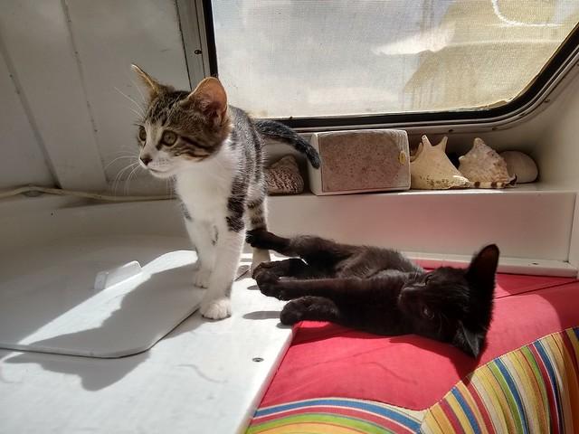 Kittens sunshine