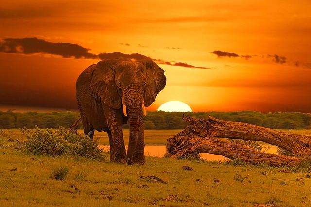 East Kenya Elephants & The Great Migration Photo Safari August 2021