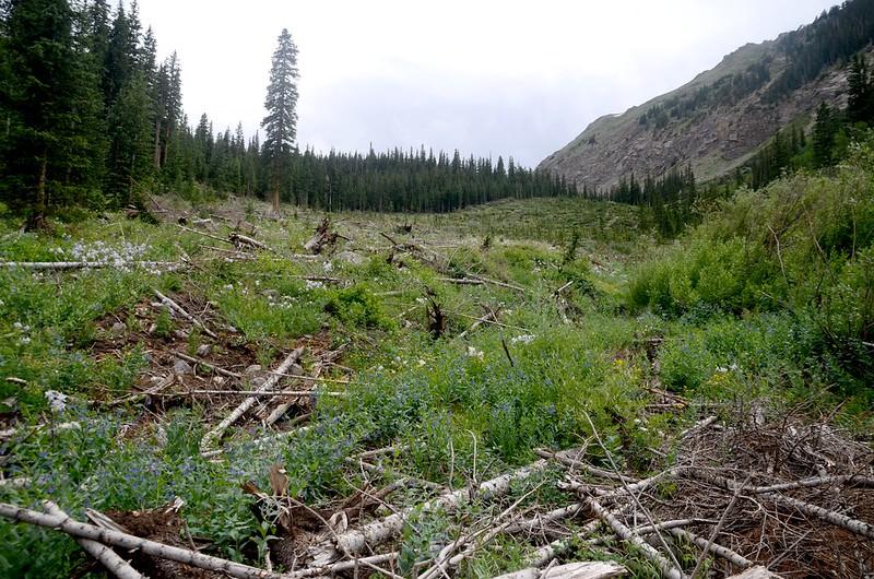 Avalanche zone (1)