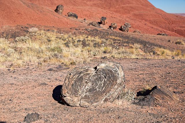 Petrified Wood Fragments While Walking the Onyx Bridge Trail (Petrified Forest National Park)