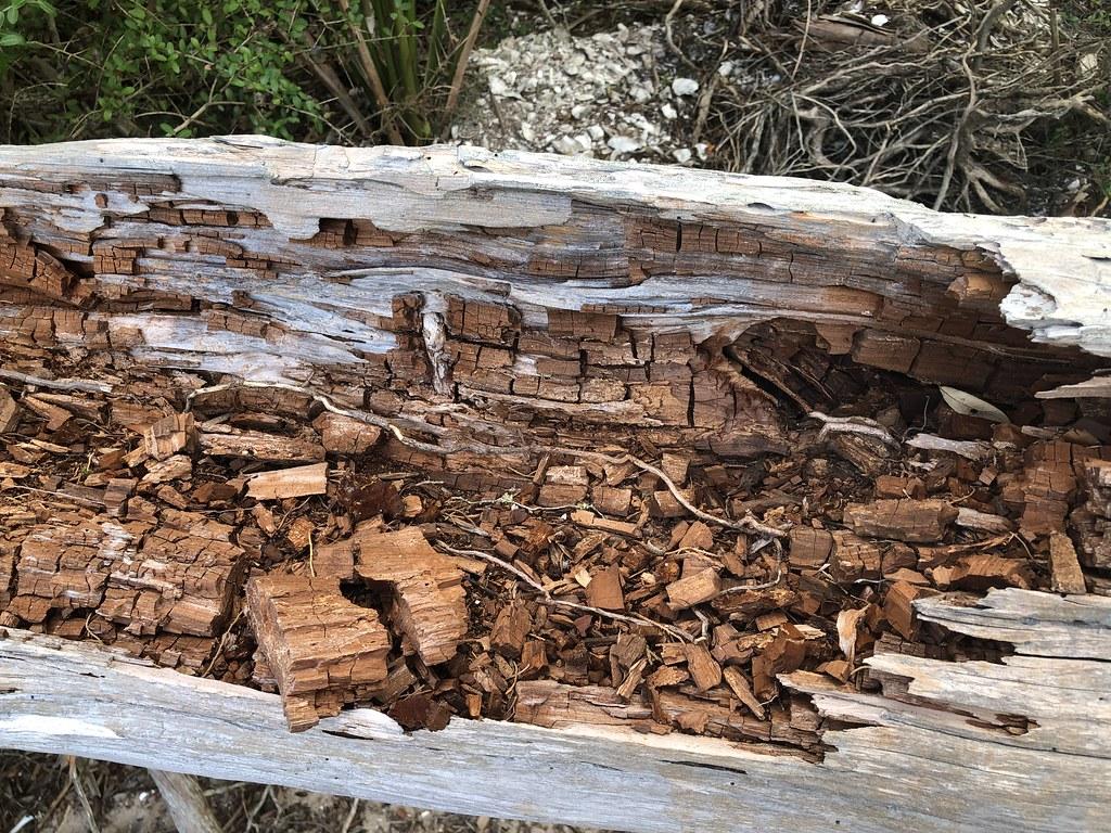 2021.07.15 Shired Island Trail Beach Driftwood 2i