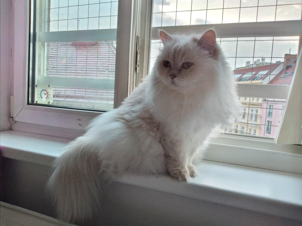 Happy Caturday - Jessie am Fenster2 am 14.07.21