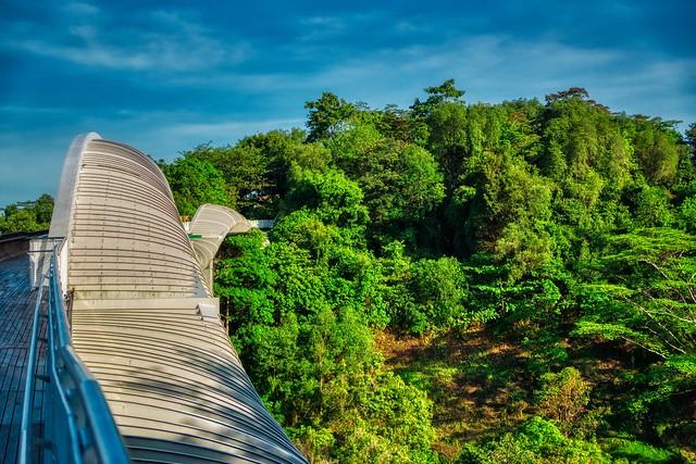 Henderson Waves Bridge on the Southern Ridges in Singapore