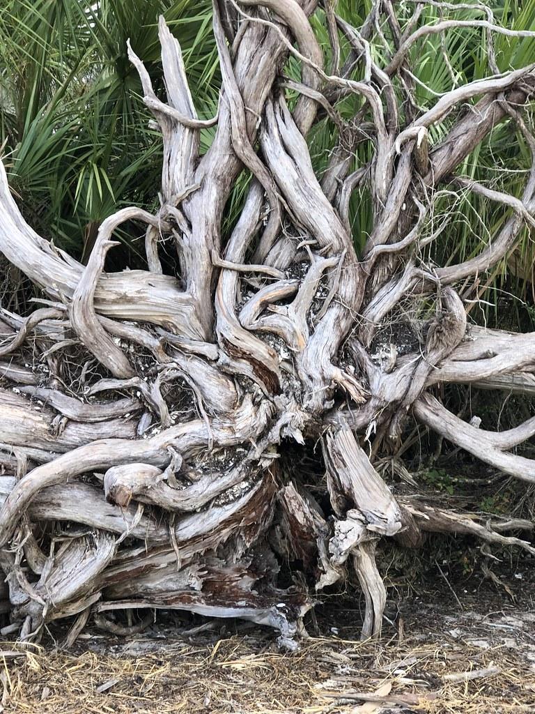 2021.07.15 Shired Island Trail Beach Driftwood 5i