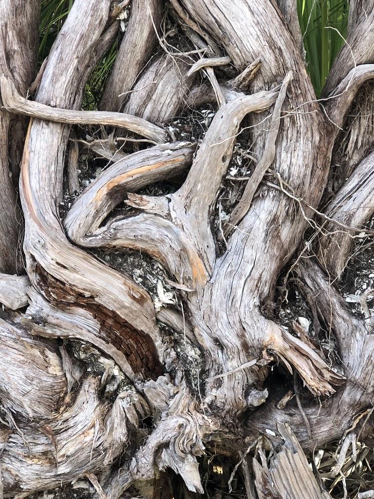 2021.07.15 Shired Island Trail Beach Driftwood 4i