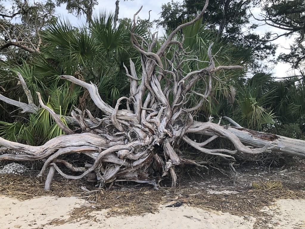2021.07.15 Shired Island Trail Beach Driftwood 1i