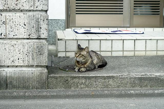 Today's Cat@2021−07−17