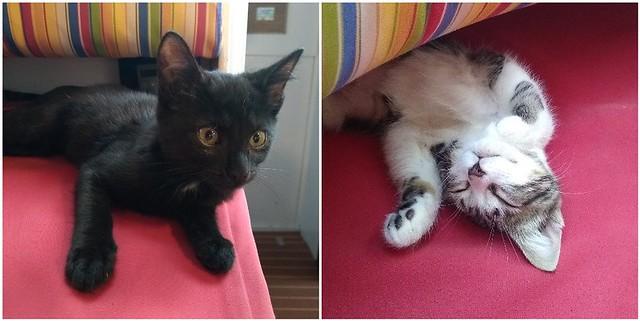 kitty closeups