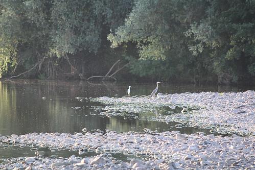 Fishing buddies (Dickie-Dai-Do)