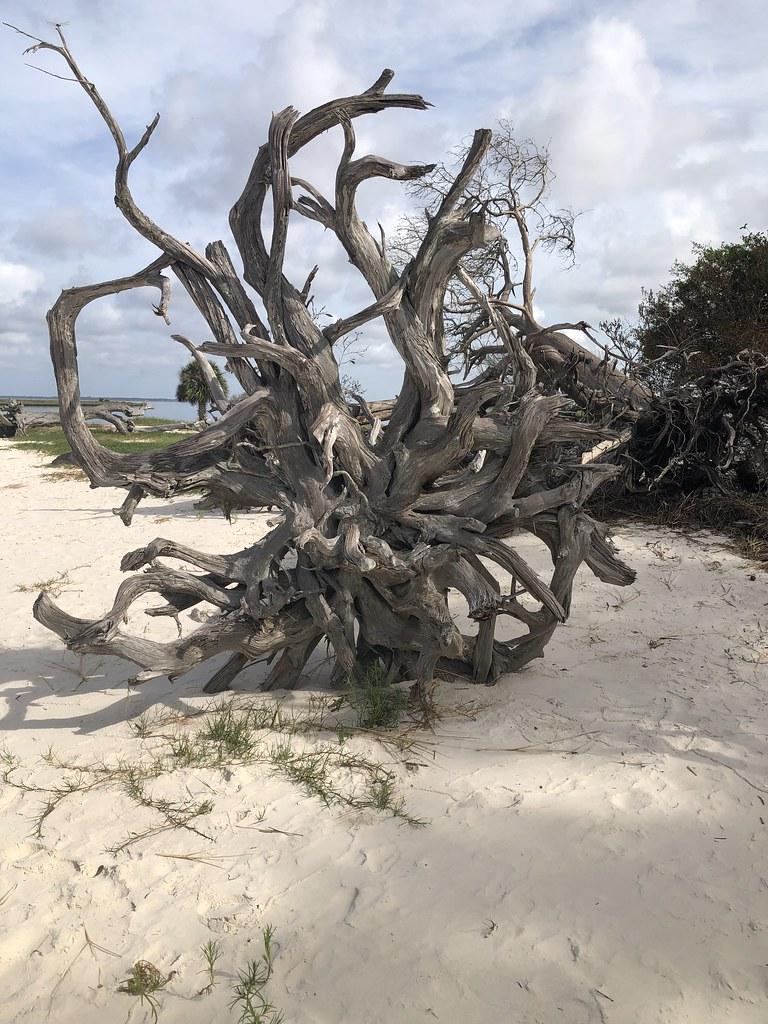 2021.07.15 Shired Island Trail Beach Driftwood 6i