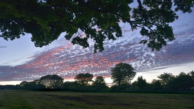Morgenhimmel über der Klink-Eiche (Quercus robur) (7a)