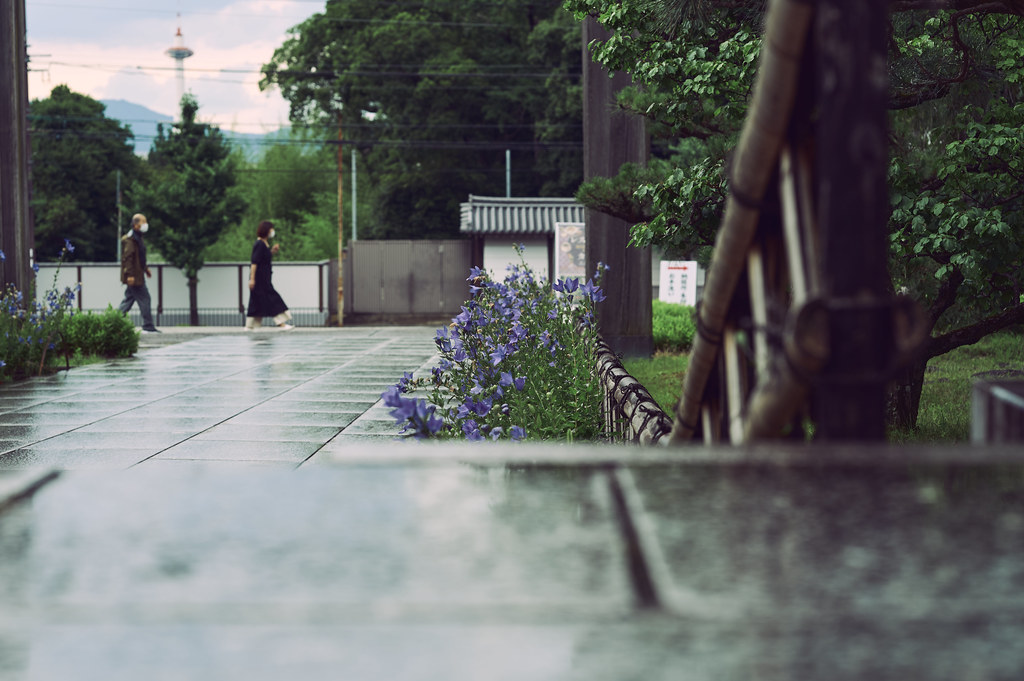 Kyoto Chishakuin Temple in Summer