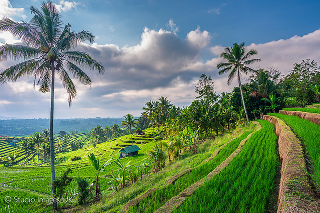 Bali Rice fields - featured on Explore, July 18th 2021