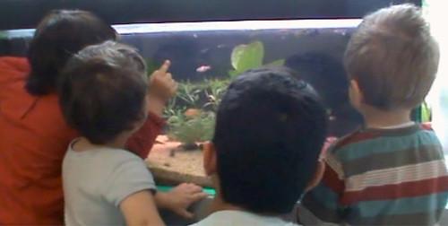 Atelierista e bambini di fronte all'acquario
