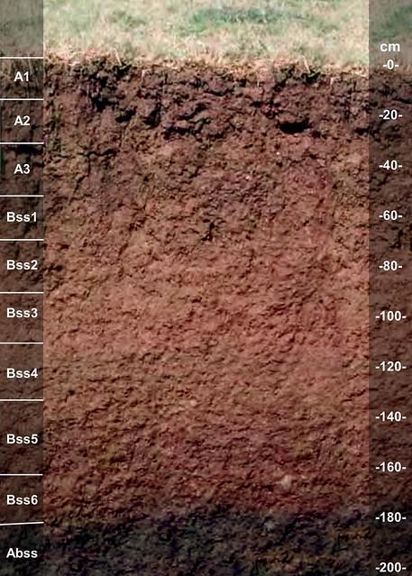 Brazoria soil series TX