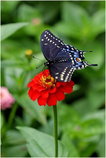210716 Yonge - Lawrence - Muir Memorial Gardens (20)